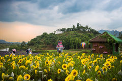Wedding Studios in Sunflower Fields Stock Image