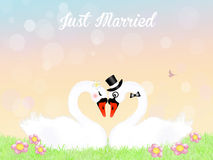 Wedding of swans. Illustration of swans in love Royalty Free Stock Photos