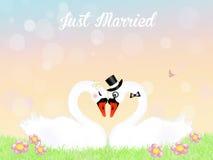 Wedding of swans Royalty Free Stock Photos