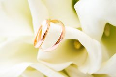 love, family, celebration, ceremony concept -wedding symbols two golden rings with callas white flowers royalty free stock photo