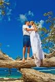 Wedding on a tree. Happy couple kissing near tree Royalty Free Stock Photo