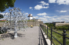 Wedding tree. Narva, Estonia. The wedding day attach leaflets with the names Royalty Free Stock Image