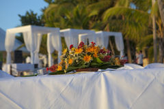 Wedding in tropic. Wedding on the Beach Royalty Free Stock Image