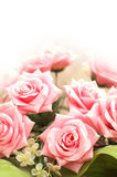 Wedding and Valentine concept with many pink roses. Wedding and Valentine  concept with many pink roses Royalty Free Stock Photography