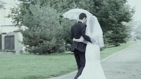 Wedding walking stock video footage