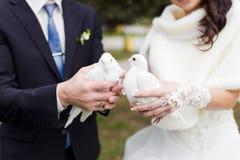 Wedding weiße Tauben Stockbild