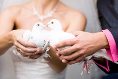 Wedding white pigeons. The bride with wedding white pigeons in the hands Royalty Free Stock Image