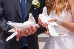 Wedding white pigeons Stock Images