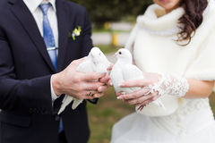 Wedding white pigeons. The bride with wedding white pigeons in the hands Stock Image