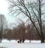 Wedding in winter park Stock Image