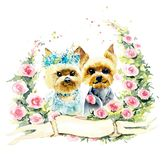 Wedding yorkshire terrier. Watercolor hand drawn illustration royalty free stock images