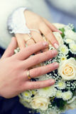 Weddings rings. A wedding etude is in colors, weddings rings Royalty Free Stock Photography