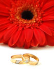 Weddings rings. On a background a red flower Stock Image
