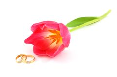 Weddings rings and tulip. Isolated on white background Stock Photography