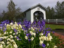 Weddle被遮盖的桥,俄勒冈,美国, 免版税库存照片