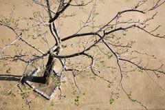 Wedergeboorte van een boom Stock Foto's