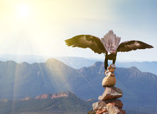 Wedge-tailed Eagle landing on rock cairn on mountain top Royalty Free Stock Image
