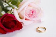 Weding rings. Red and pink rose with wedding rings Stock Photography