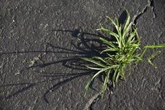 weed Imagens de Stock