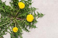 weed Foto de Stock