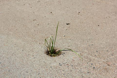 Weed breaks through the concrete. Survival Grass with difficulty breaking through concrete in the urban environment stock photo