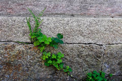 Weed in the broken rock and wooden pathway. The weed in the broken rock and wooden pathway stock photography