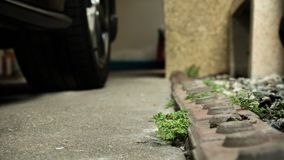 Weed at the car parking royalty free stock image