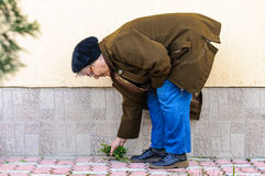 Weed cleaning garden old woman bend Stock Photo