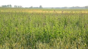 Weed field in sunset light summer stock video footage