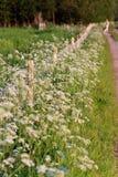 Weed florece en el borde de un camino imagenes de archivo