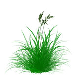 weed flower in brush Royalty Free Stock Images