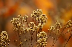 Weed Flowers. With Warm Autumn color background royalty free stock photos