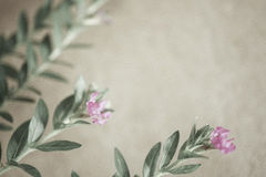 Weed flowers in vintage color style on mulberry paper texture Royalty Free Stock Images