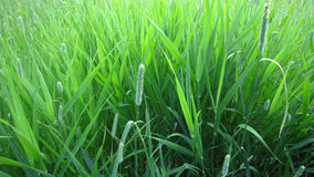 Weed grass composition Royalty Free Stock Photo