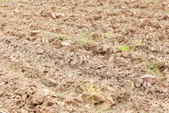 Weed grass on dry soil ground cultivated land. Stock Image