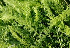 Weed grass Stock Photo