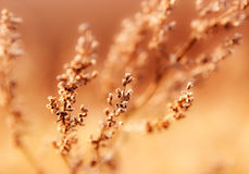 Weed grass in soft focus Stock Images