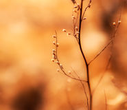 The weed grass in sunlight Stock Image