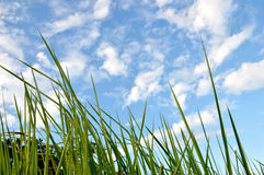 Weed grass. In the sunshine Royalty Free Stock Photos
