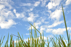 Weed grass. In the sunshine Stock Photos