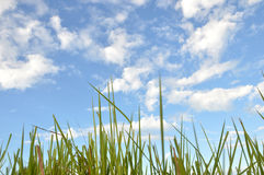 Weed grass. In the sunshine Stock Images