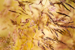 Weed grass in the sunshine Royalty Free Stock Image