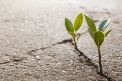 Weed growing Stock Photography