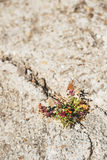 Weed growing through crack in pavement.  royalty free stock image