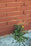 Weed growing through crack in pavement.  royalty free stock photos