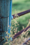 Weed growing by the gate. A weed growing by a vintage farm gate stock images