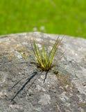 Weed growing through rock Stock Photos