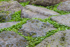 Weed growing between slabs Royalty Free Stock Photography