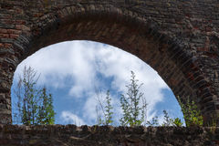 Weed growing in the window arch of a brick wall in the monastery. Ruin, Bad Doberan, northern Germany, against a blue sky with white clouds royalty free stock photos