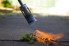 Weed Killer. A weed killing blow torch being used to incinerate a weed Royalty Free Stock Image